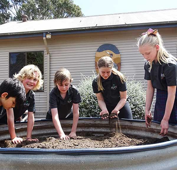 Alvie Primary School Grounds 6